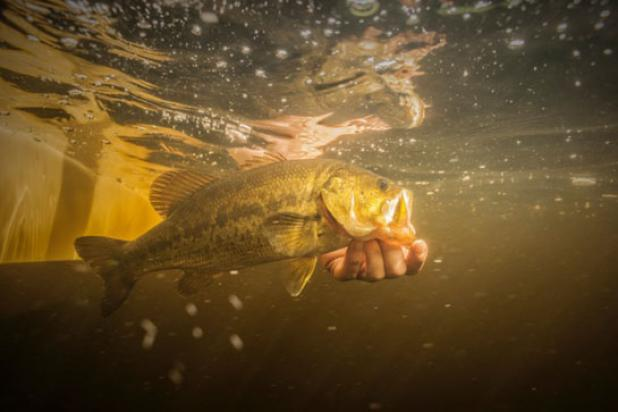 Knowing How to Gear Fish for Bass Will Catch You More Trout on Flies