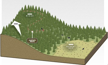 Whitetail Deer: How to Still-Hunt the Rut
