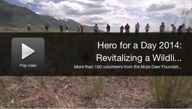 Hero for a Day Video: Revitalizing a Wildlife Management Area for Utah Mule Deer