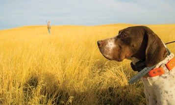 The Uplanders: A Photo Tribute to Man's Best Friend