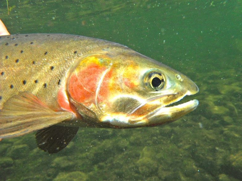 """Why Not More """"Quality Trout Management?"""""""