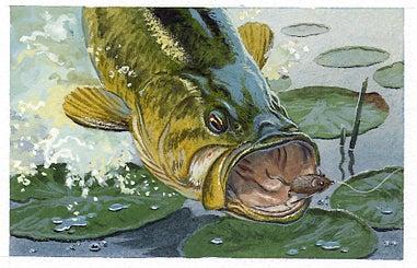 49 Classic Fishing Tips From Field & Stream Magazine