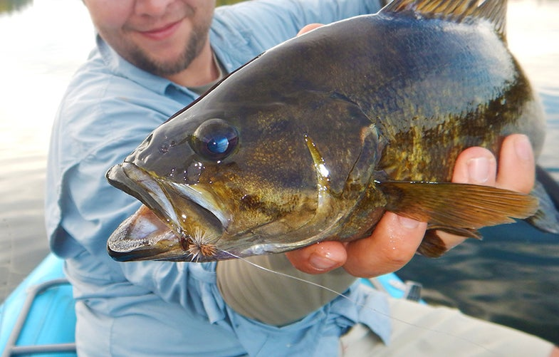 Trout Style Flyfishing For Smallmouths Is My New Favorite Challenge