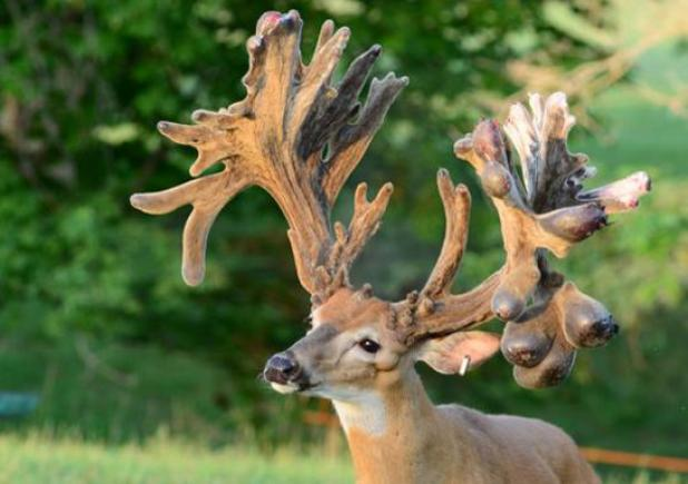 Federal Lawmakers Set Sights on Captive Deer Industry