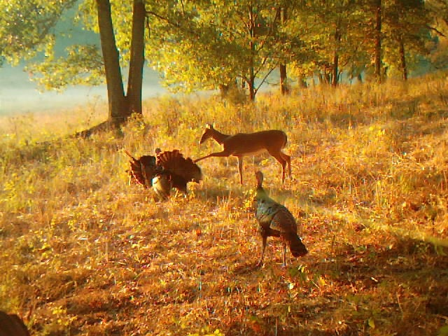 The 40 Best Photos From Our Spring Trail Cam Contest (Round I)