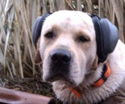 Mutt Muffs: Protect Your Gun Dog's Hearing