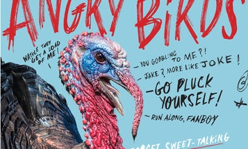 Six Ways to Tick Off, and Kill, Big Angry Gobblers