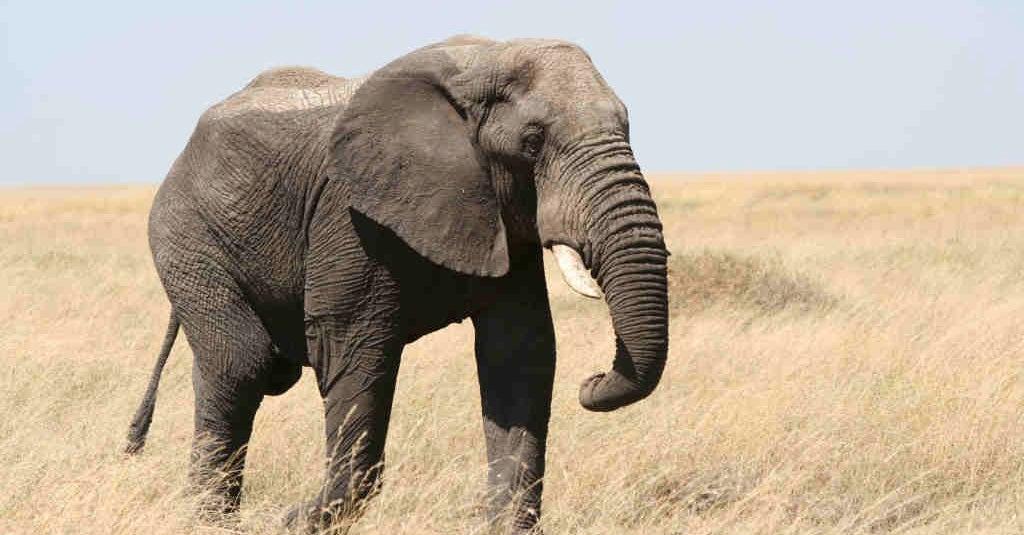 CNN: Humans Could Cause Next Mass Extinction