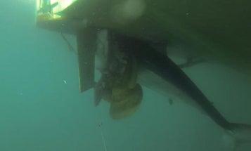 Mako Shark Stuck in Propeller Costs Crew $63K in Tournament Winnings