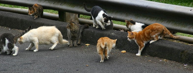 More Than Half of Deer in NE Ohio Infected by Feral Cats