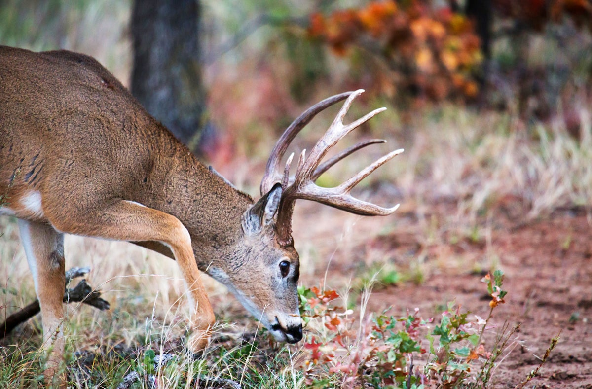National Summary: Colder Weather Should Fire Up the Rut