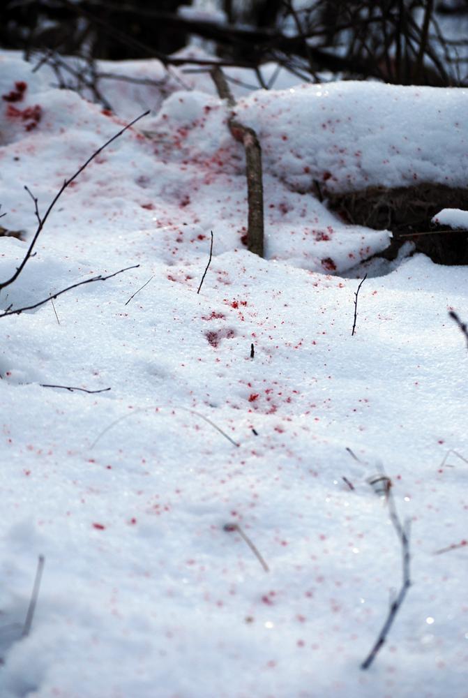 Blood Trailing Deer: Keep Looking