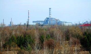 New Study Finds Abundant Wildlife Among Chernobyl's Ruins