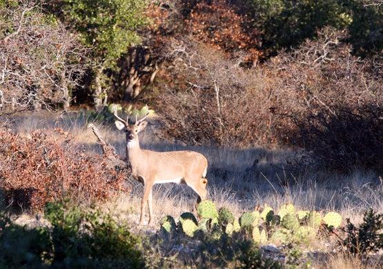 httpswww.fieldandstream.comsitesfieldandstream.comfilesimport2014importBlogPostembed2007_December_Central_TX_whitetail_hunt_213.jpg