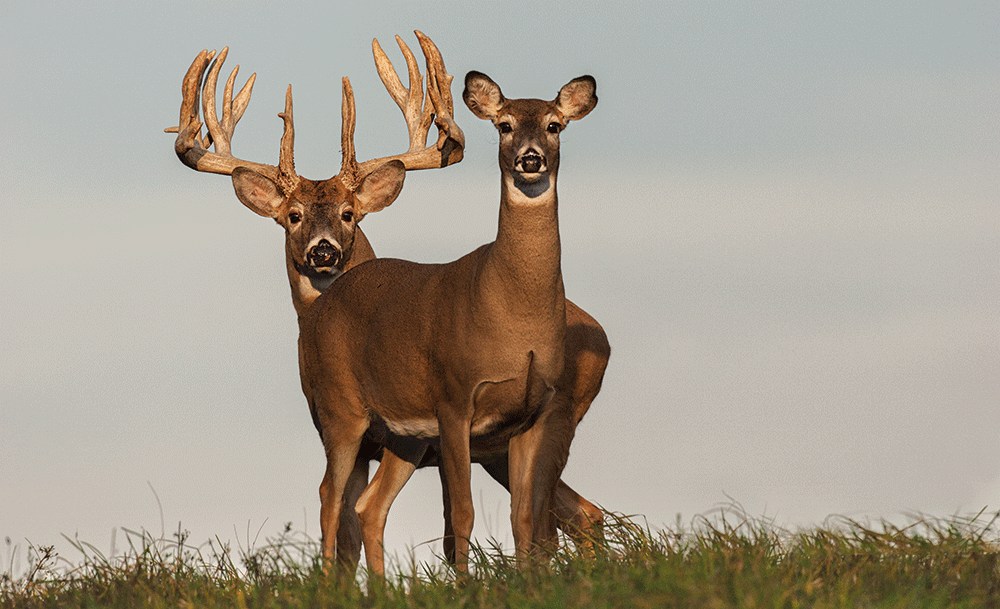 best days of the rut