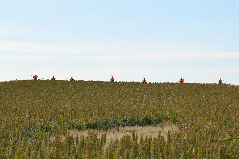 Welcome to Roosterland: Scenes from a South Dakota Pheasant Hunt