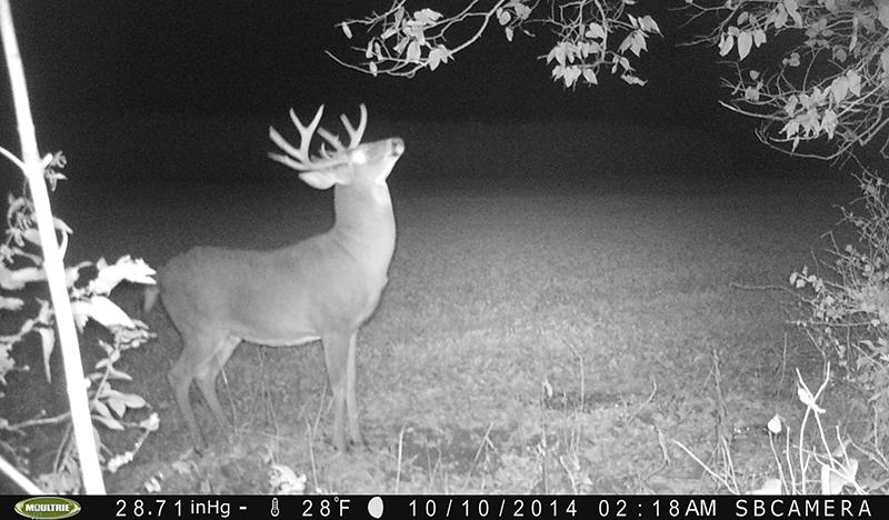 Bucks Are Revving Their Rut Engines