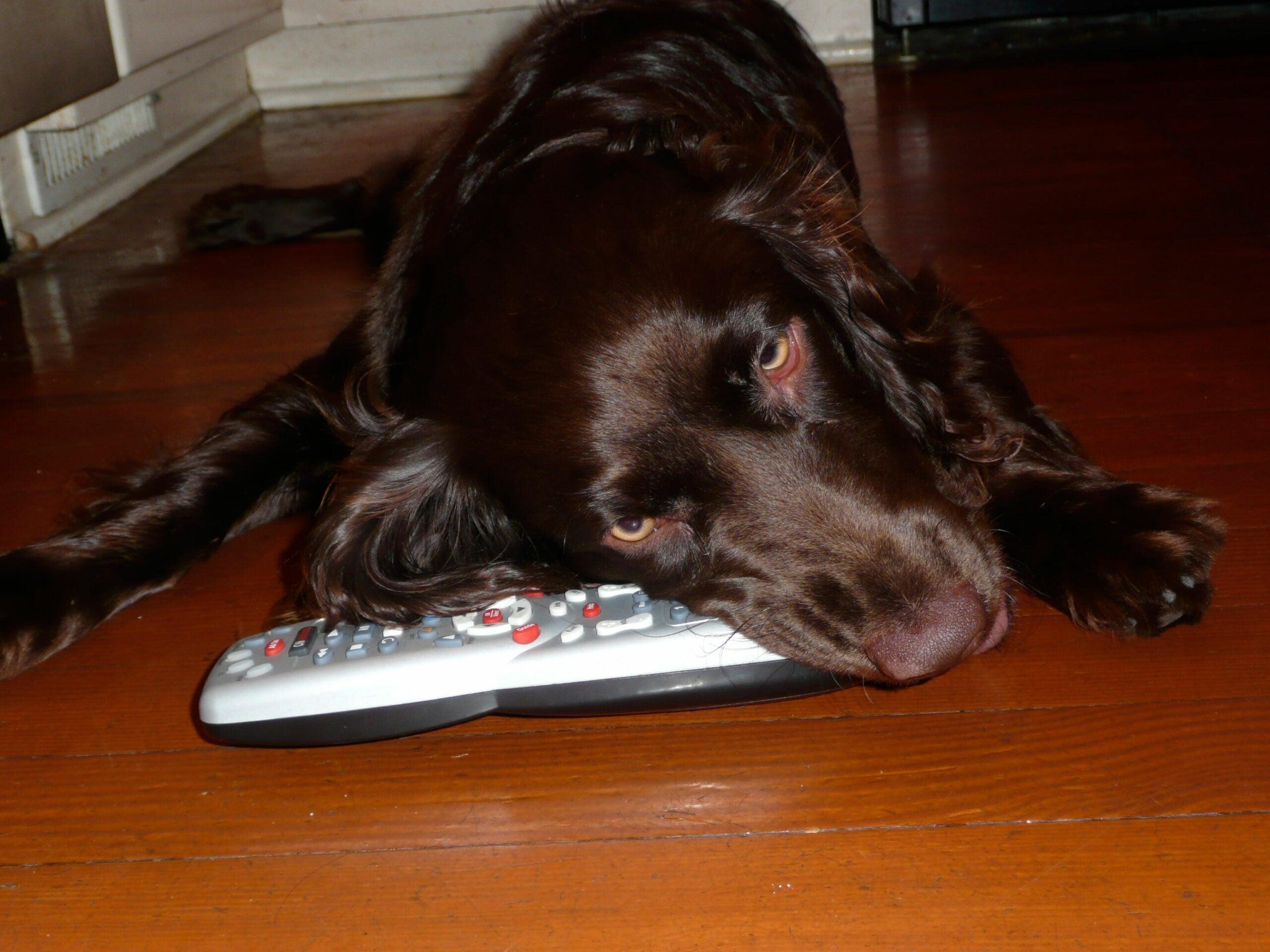 Appetite for Destruction: When Good Dogs Chew