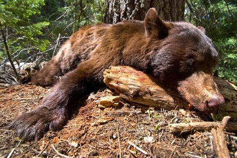 httpswww.fieldandstream.comsitesfieldandstream.comfilesimport2014importImage2010photo23ID_Bear18.jpg
