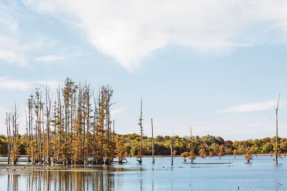 oxbow lake near the hatchie nwr headquarters