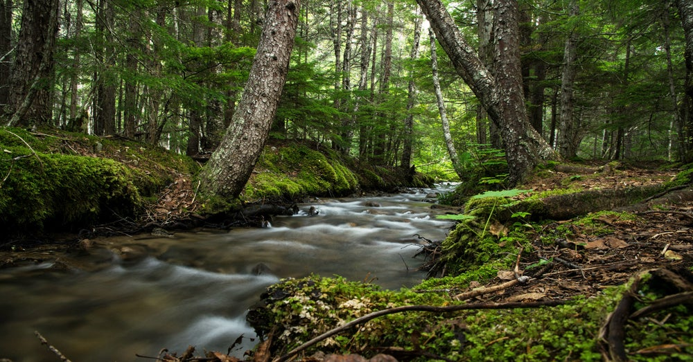 Senate Budget Undoes Water Rule, Cuts Conservation Funds