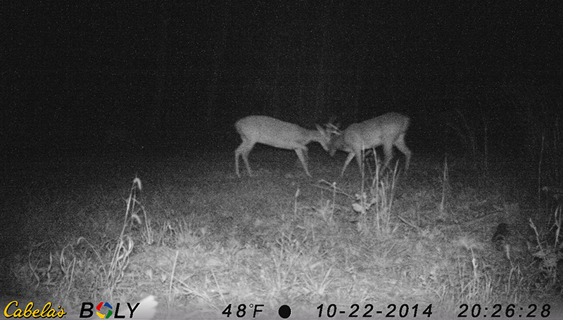 In Most Places, The Pre-Rut is Popping