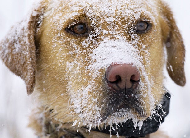 How to Protect Your Hunting Dog From Hypothermia