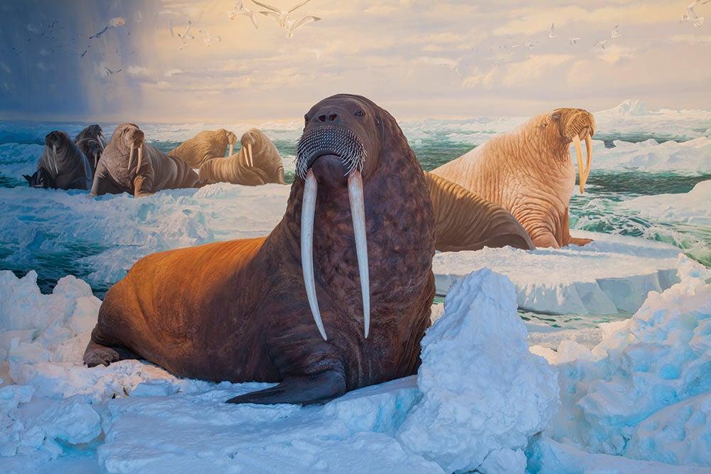 Polar Exploration Wonders of Wildlife National Museum & Aquarium