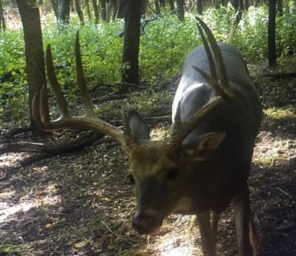 Western Rut Report: Heat Hurting the Hunting in Oklahoma