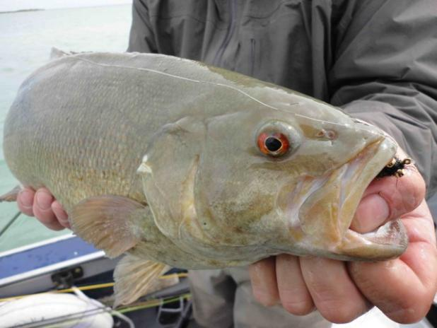 Smallmouths: The Ultimate Fly-Rod Fish?