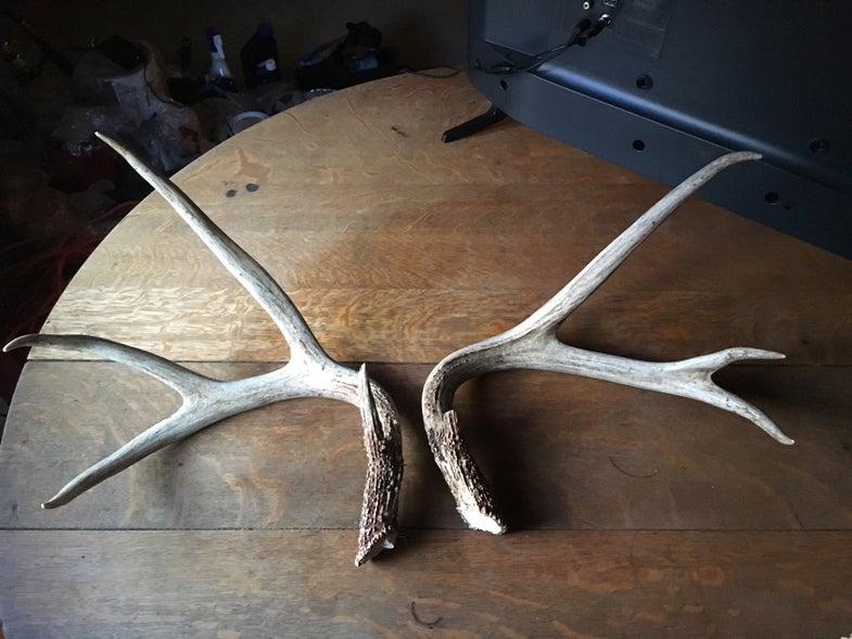 Paula Smith, Washington DC, shed antlers, 2018