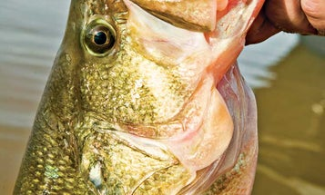 Trigger More Bass Strikes With These Bait Combos