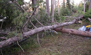 Close Call: Crushed by Two Trees During Backcountry Storm