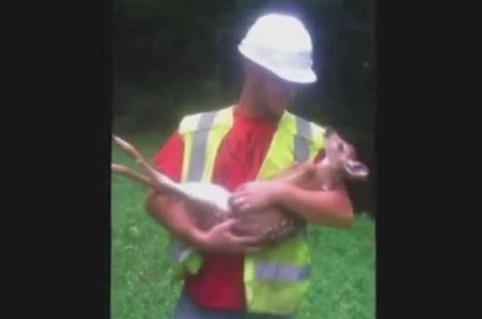 Video: Workers Rescue Fawn Whitetail … and Then it Gets Really Clingy