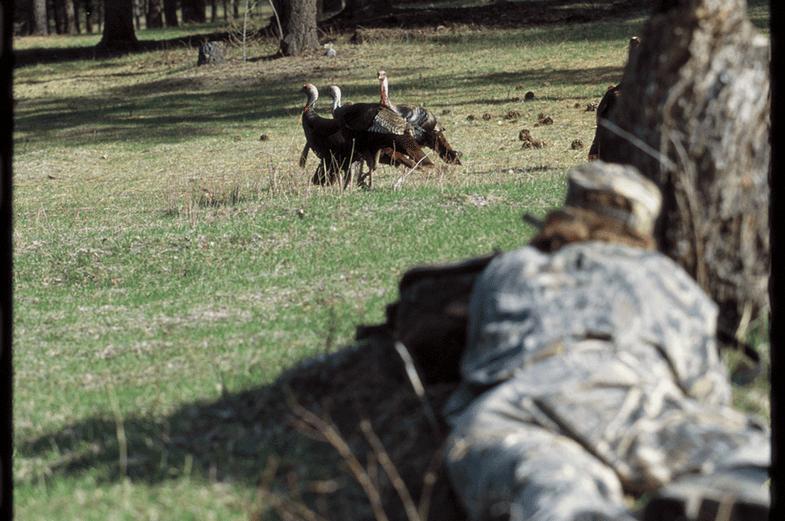 Turkey Hunting Tactic: Make the Stalk