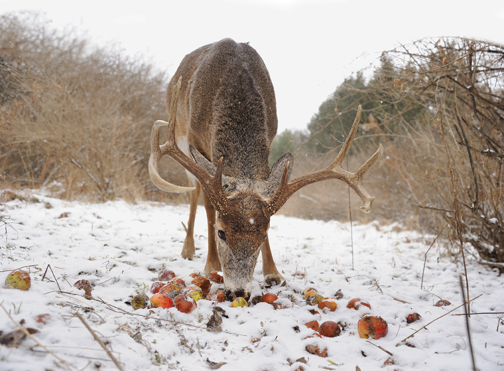 Find a Second Food Source for Late-Season Bucks