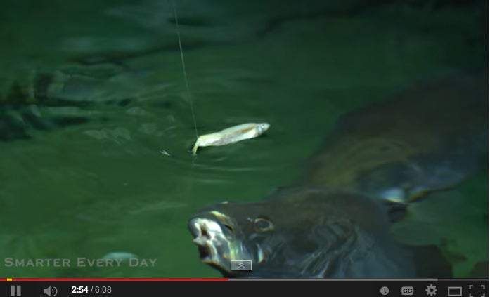 Proof That Everything (Including How Fish Feed) Is Cooler Shot In High Speed