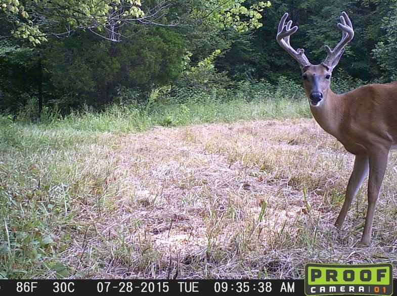mid-south buck