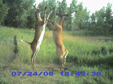httpswww.fieldandstream.comsitesfieldandstream.comfilesimport2014importImage2008legacy41812371.jpg