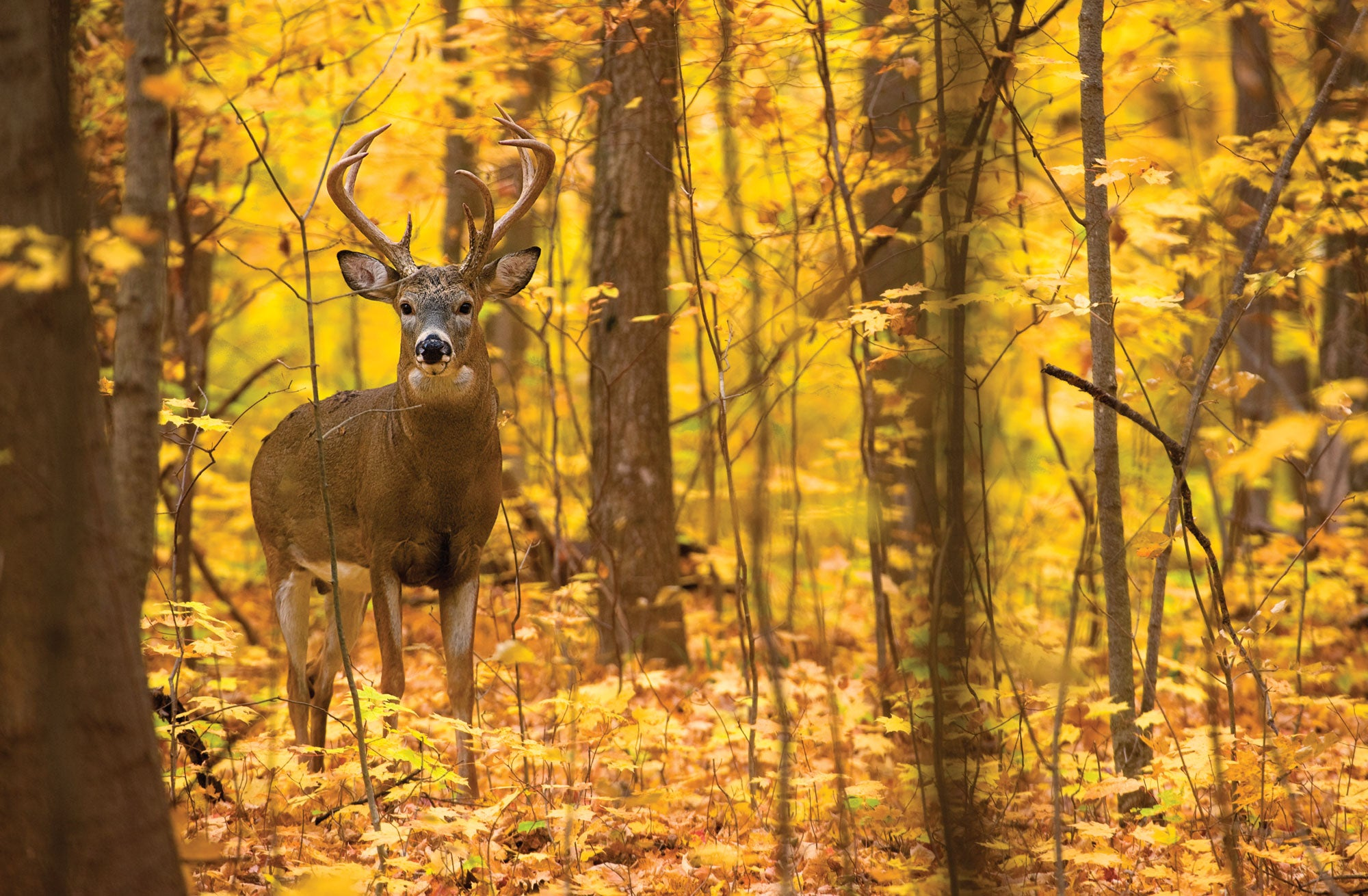 Whitetails: How to Find Rut Action Right Now