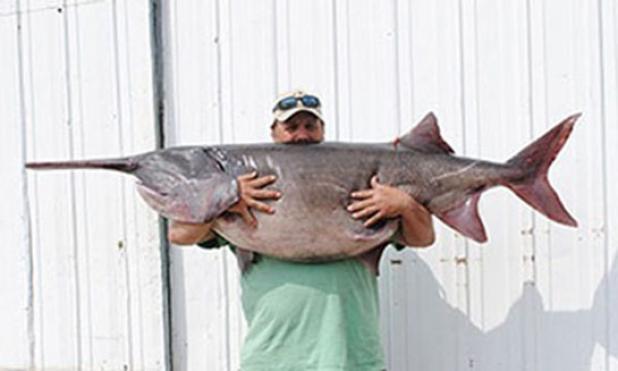 South Dakota Angler Lands Record 128-Pound Paddlefish