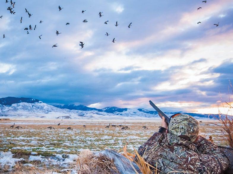 hunter aiming at canada geese
