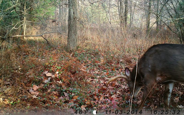 Bucks Are Still Very Active