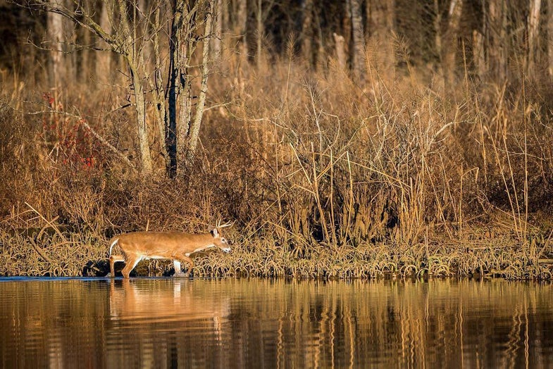 Lessons Learned from the 2015 Rut