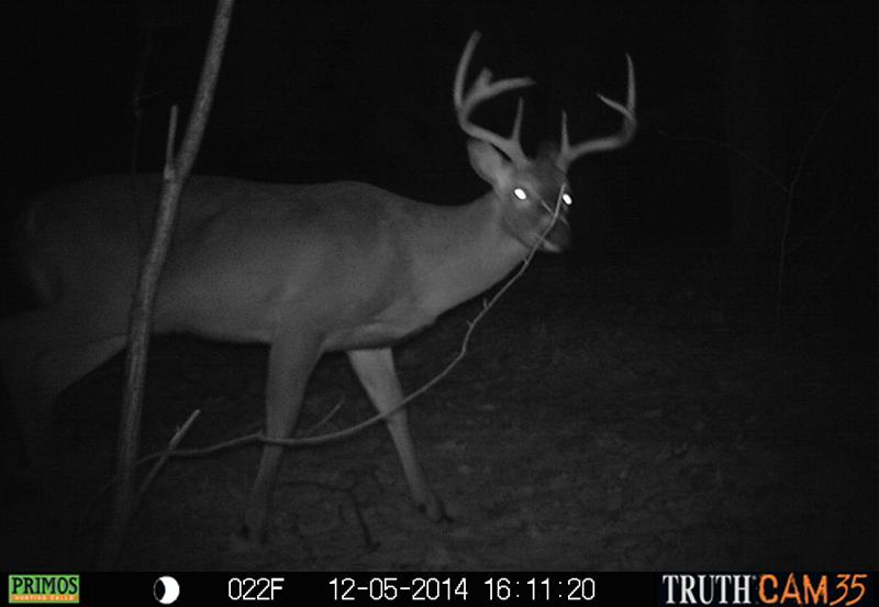 Rut Ebbs, but Deer Still Moving
