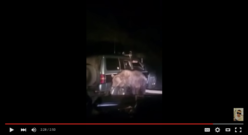 Video: Bear Gets Hit By SUV Then Launches Terrifying Attack