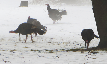 Turkey Hunting Tips for Bad-Weather Birds