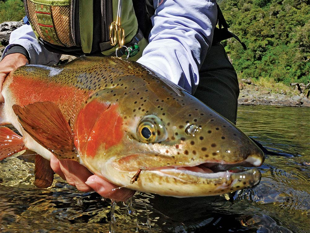20 20 club fishing summer
