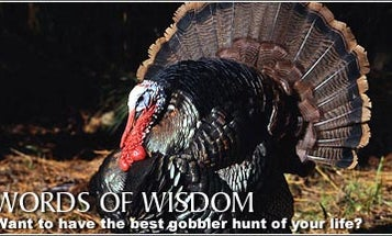 Stickley's Words of Wisdom
