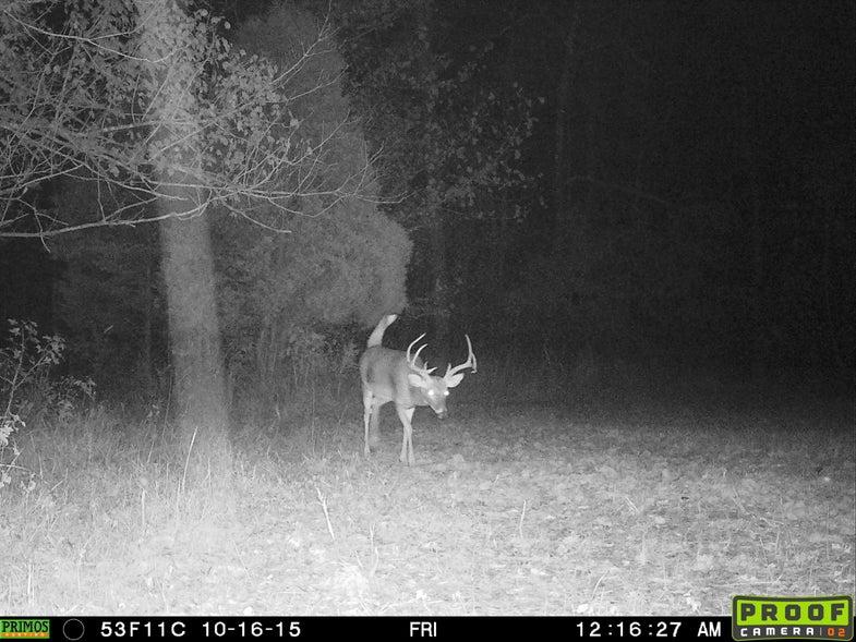 Nocturnal buck